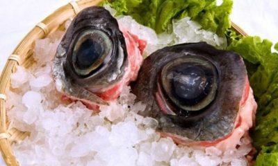 Mắt cá ngừ đại dương, sò huyết ăn là mê ở xứ hoa vàng cỏ xanh-1